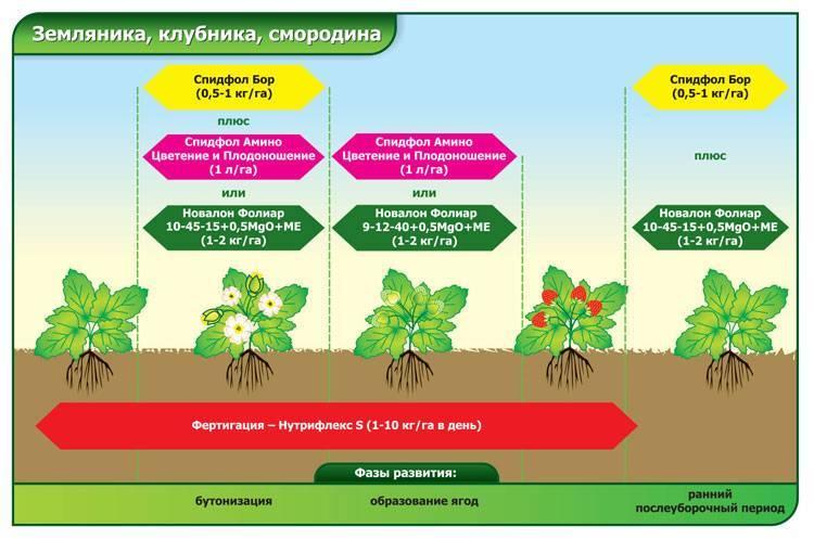 Как правильно размножать и ухаживать за пеперомией лилиан: посадка и полив