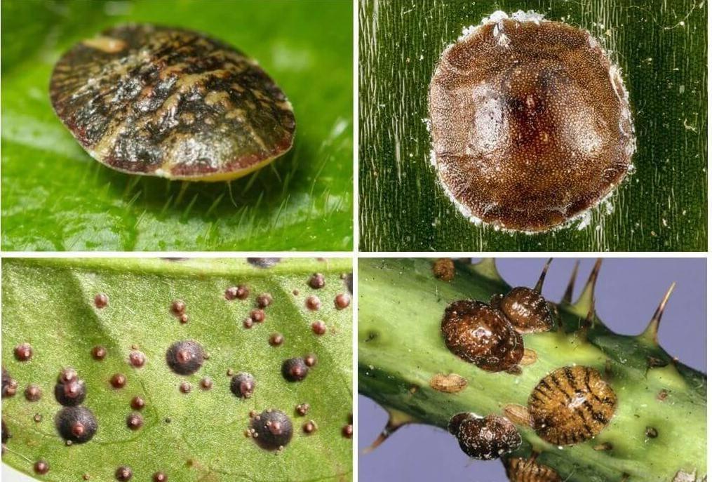 Как избавить комнатные растения от вредителей: паразиты на цветах