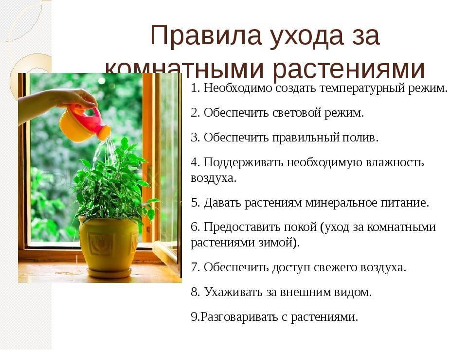 Свинчатка: особенности и советы по уходу - энциклопедия цветов