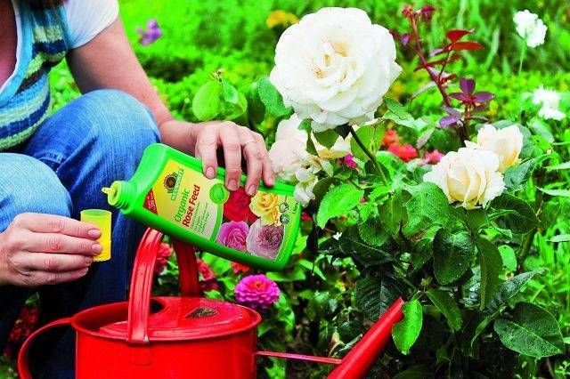 Чем подкормить клематисы весной для пышного цветения?