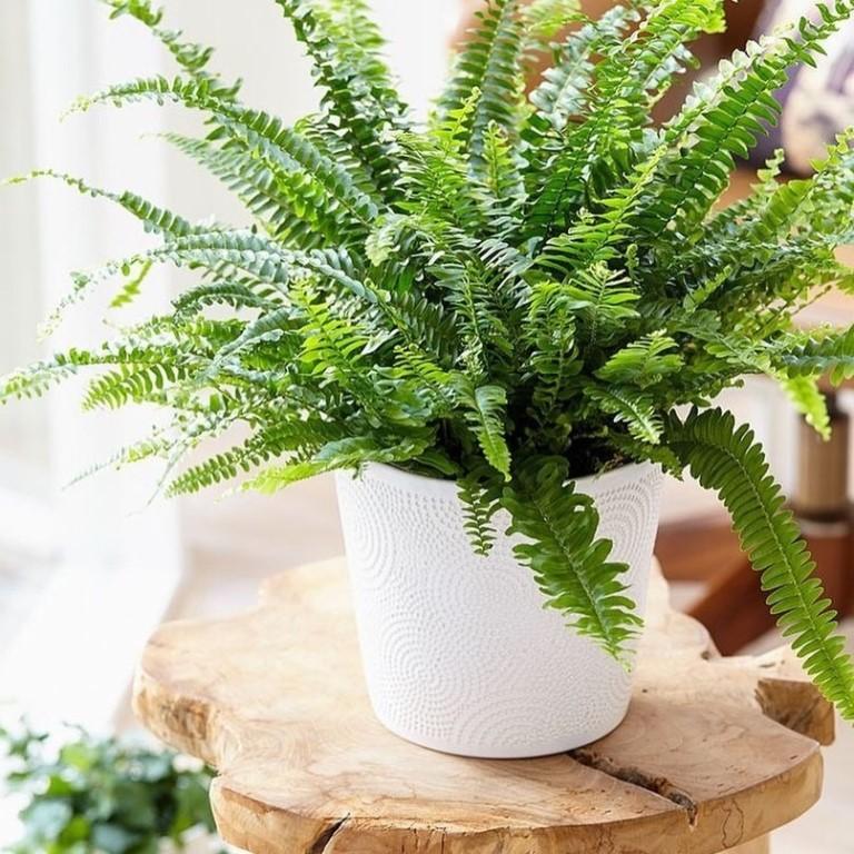 изображение неприхотливые домашние растения фото и названия расскажу