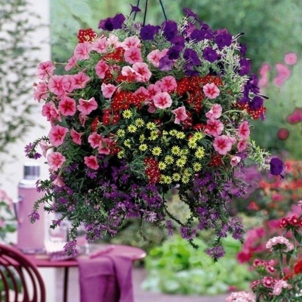 Цветы из сказки: ампельные растения в горшках и кашпо