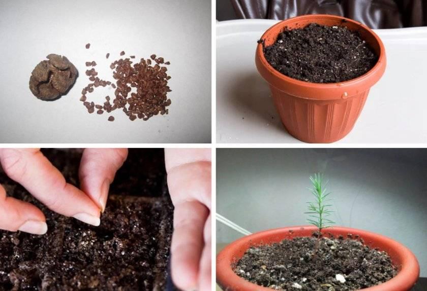 Декабрист цветок — как посадить и ухаживать