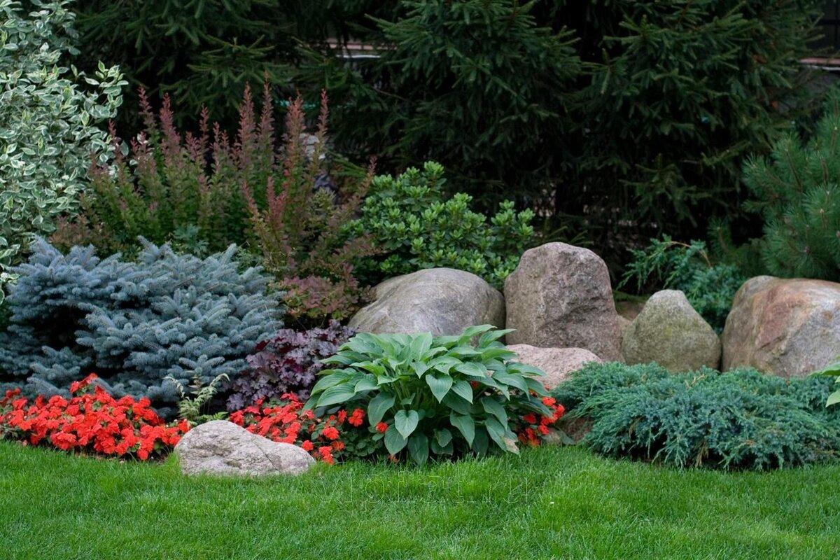 Сочетания можжевельника с растениями в саду
