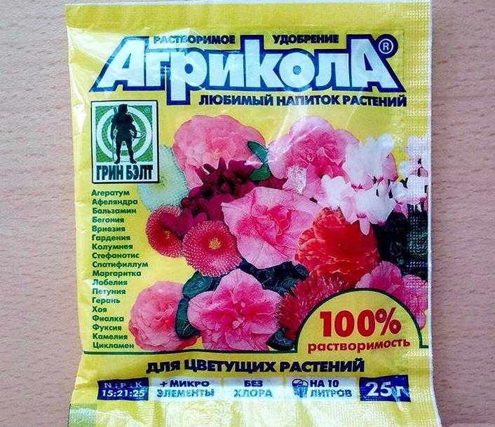 Чем подкормить фуксию для обильного цветения