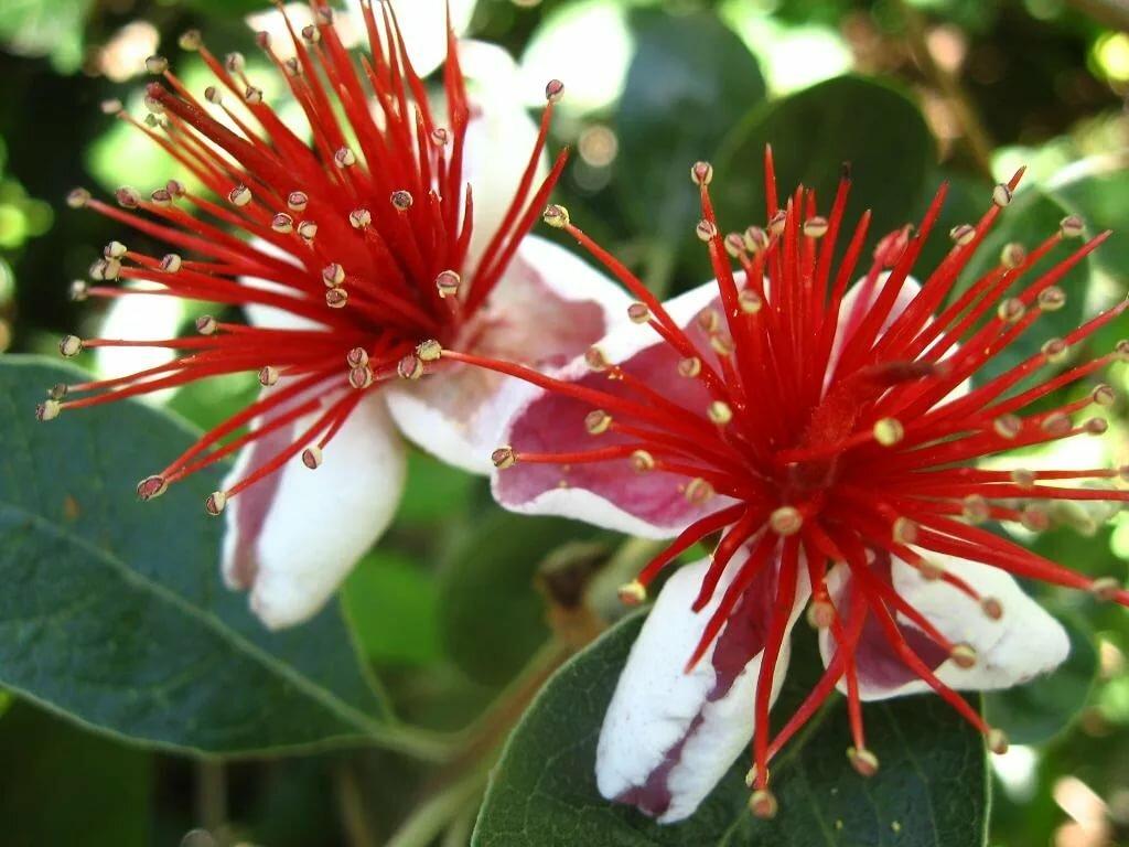 Сакура дерево фото когда и где растет и цветет дерево сакуры