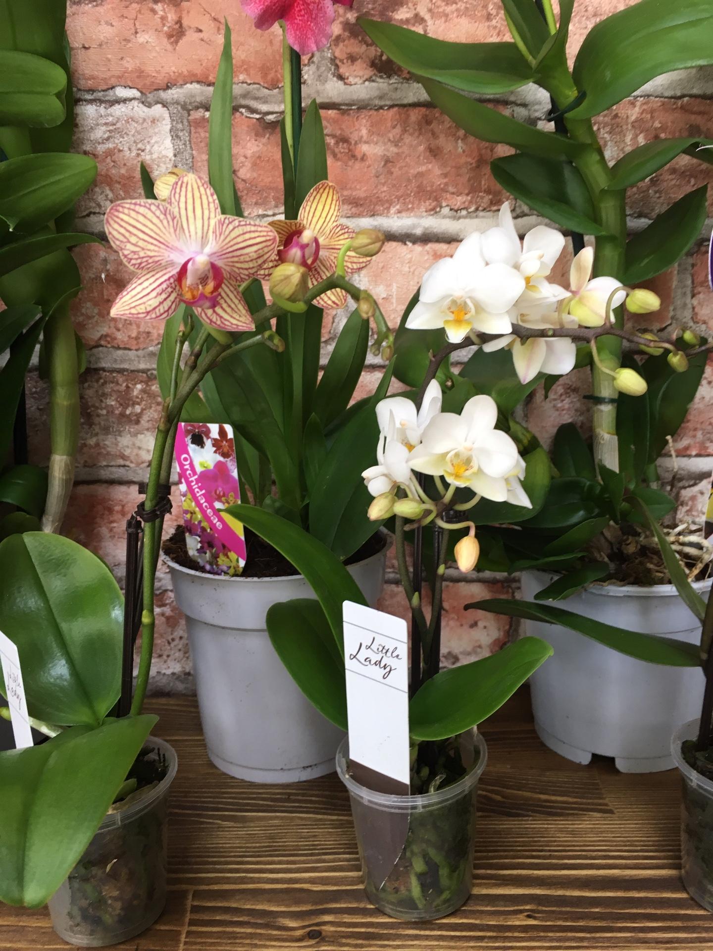 Инструкция, как правильно посадить орхидею в горшок