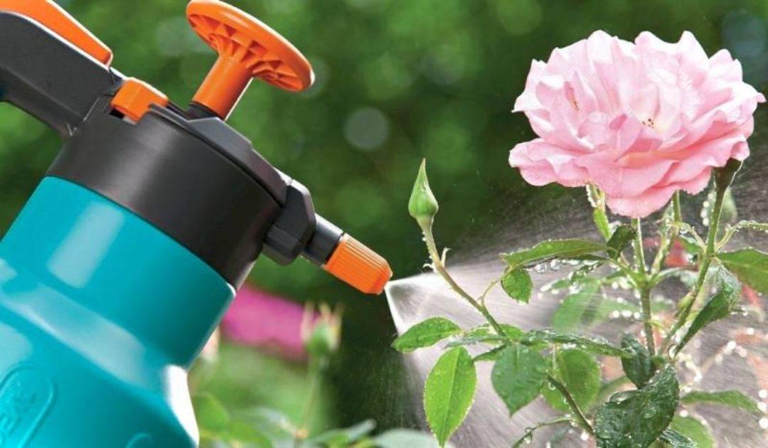 Секреты посадки жасмина или чубушника и правила ухода за кустарником