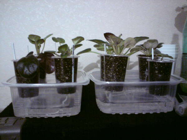 """Все, что нужно знать о фитильном поливе комнатных растений - """"цветоводство"""" :: читать на сайте leplants.ru"""