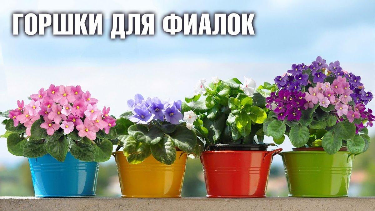 Как пересаживать фиалки во время цветения: как выбрать горшки, подготовить землю