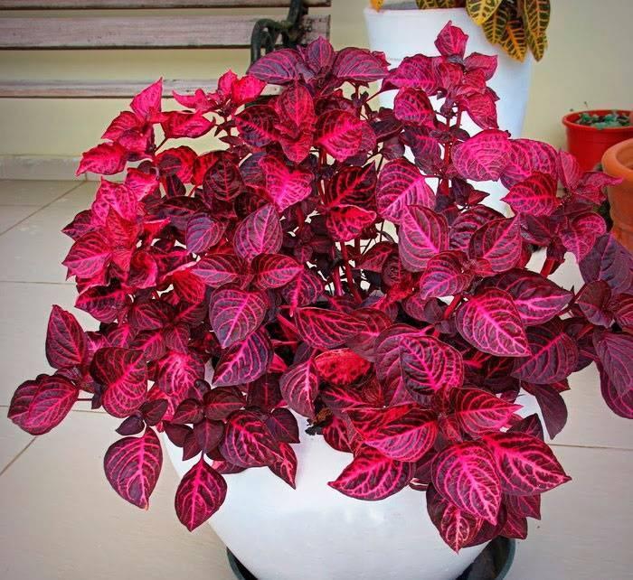 """Удобрение для спатифиллума: чем подкармливать цветок """"женское счастье"""", чтобы он цвел в домашних условиях, как это правильно делать и каков уход за почвой?"""