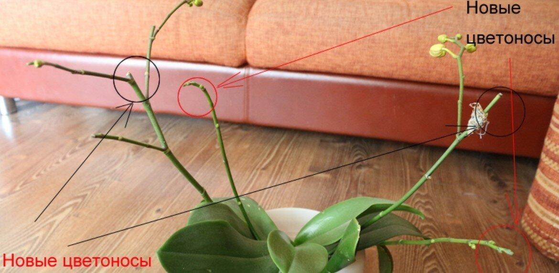 Орхидея отцвела— что делать дальше с растением