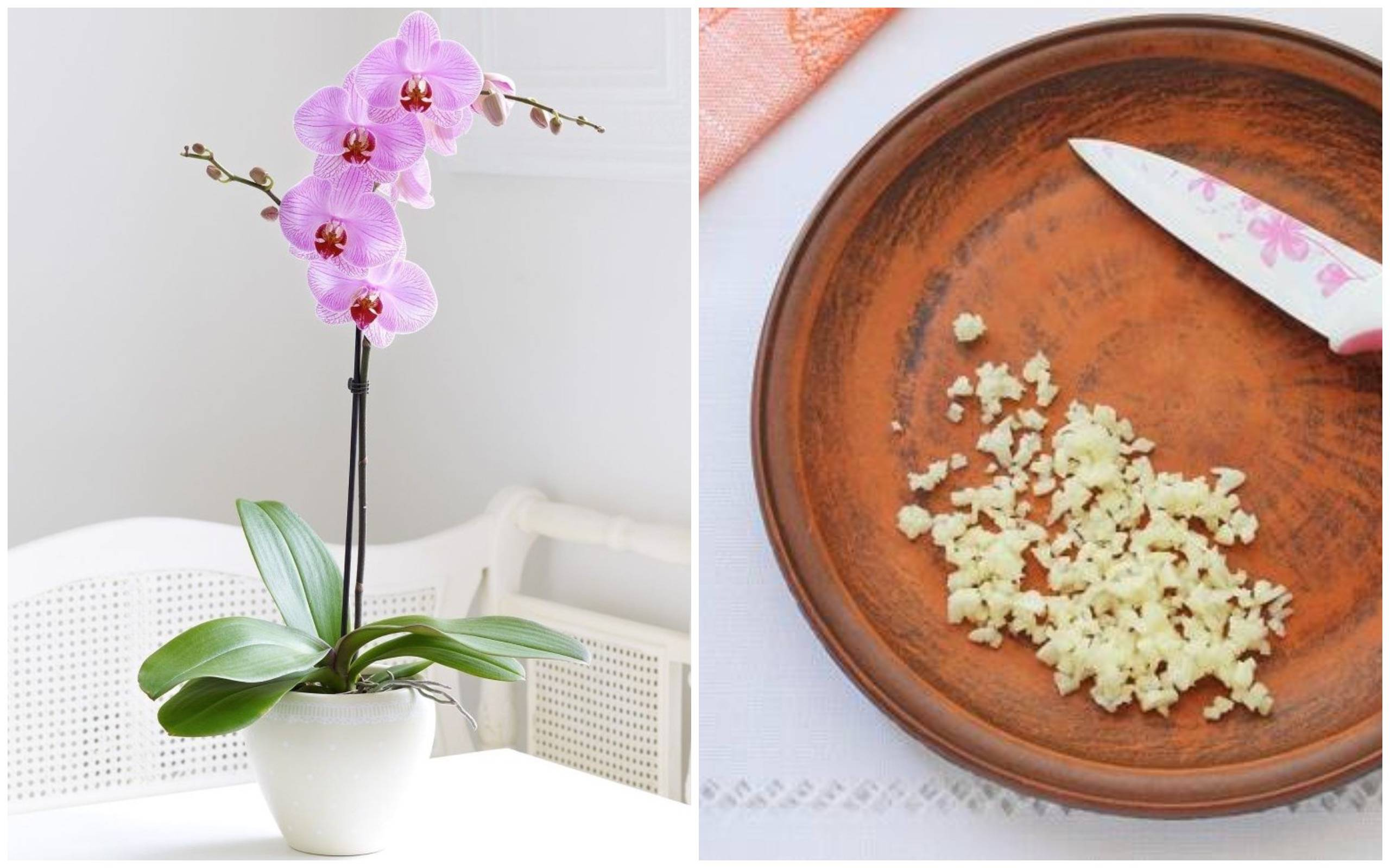 Удобрение для орхидей: когда вносить подкормки, как правильно и с какой частотой их нужно использовать и какой состав смеси, сделанной своими руками, лучше?