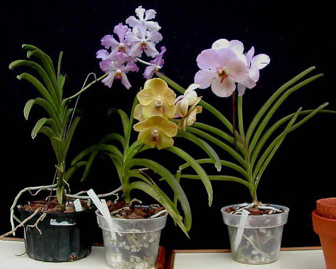 Уход за орхидеей в домашних условиях и ее разведение для новичков - практическое руководство по правильному выращиванию комнатного цветка в горшке, а также его фото