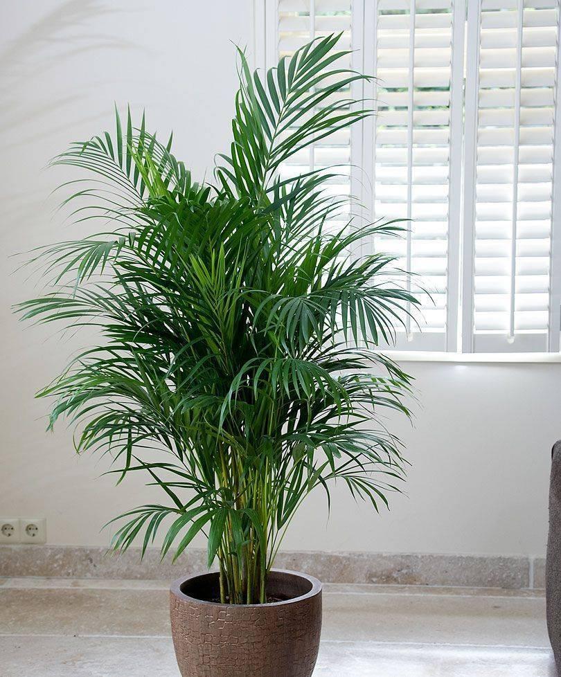Самые необычные комнатные растения