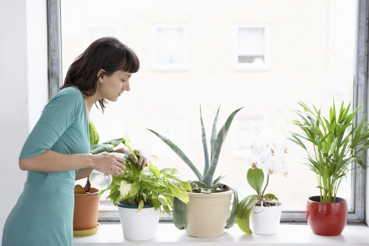 Советы, как правильно поливать алоэ в домашних условиях