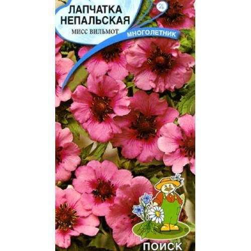 Цветок лапчатка: выращивание и уход, фото, посадка и размножение, свойства
