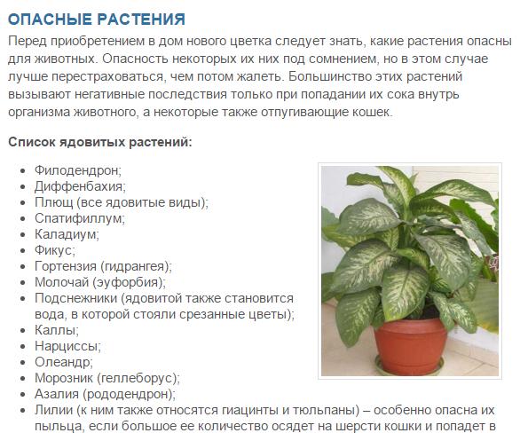 Какие комнатные растения ядовиты и могут вас убить: опасные и вредные