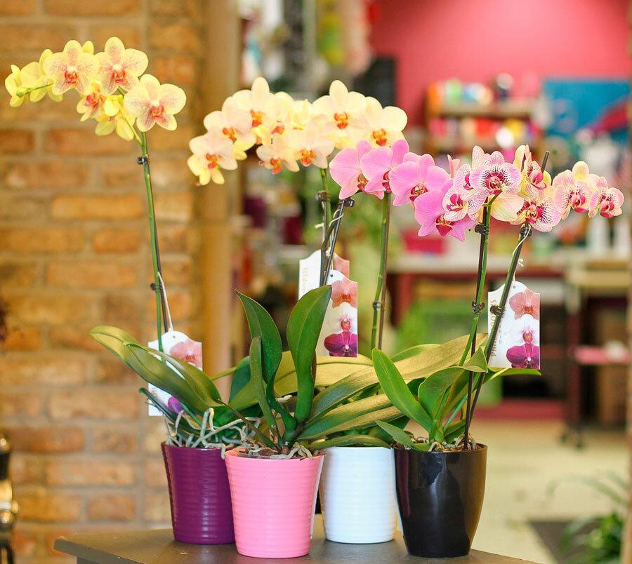Основные причины болезней листьев орхидеи: когда отпали, пожелтели и другие примеры
