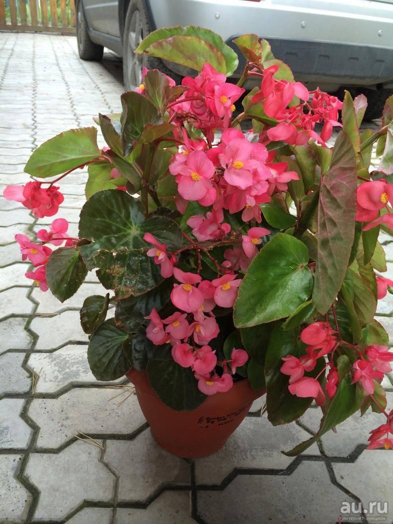 Цветущие комнатные растения и самые красиво цветущие популярные цветы