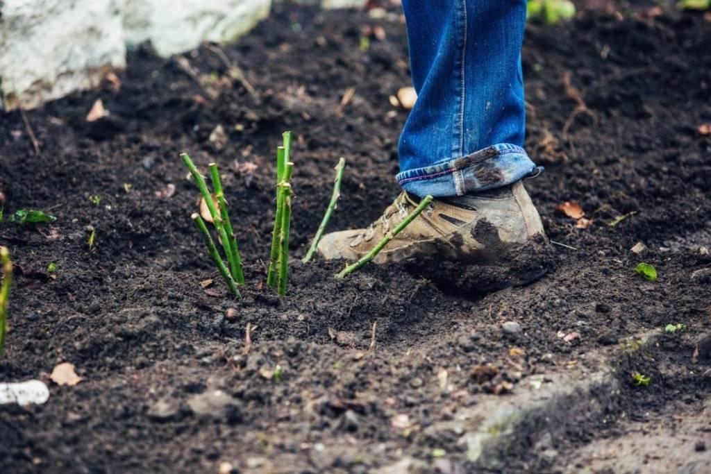 Грунт для гибискуса: что за состав почвы должен быть у комнатного и уличного видов цветка и какую землю нужно купить, чтобы содержать растение в домашних условиях?