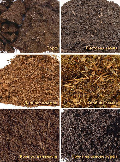 Лучший грунт для рассады: состав, подготовка почвы, рекомендации и отзывы