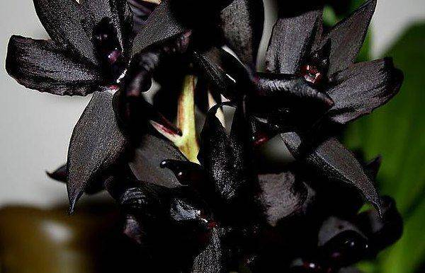 Желтые орхидеи: описание, виды и уход