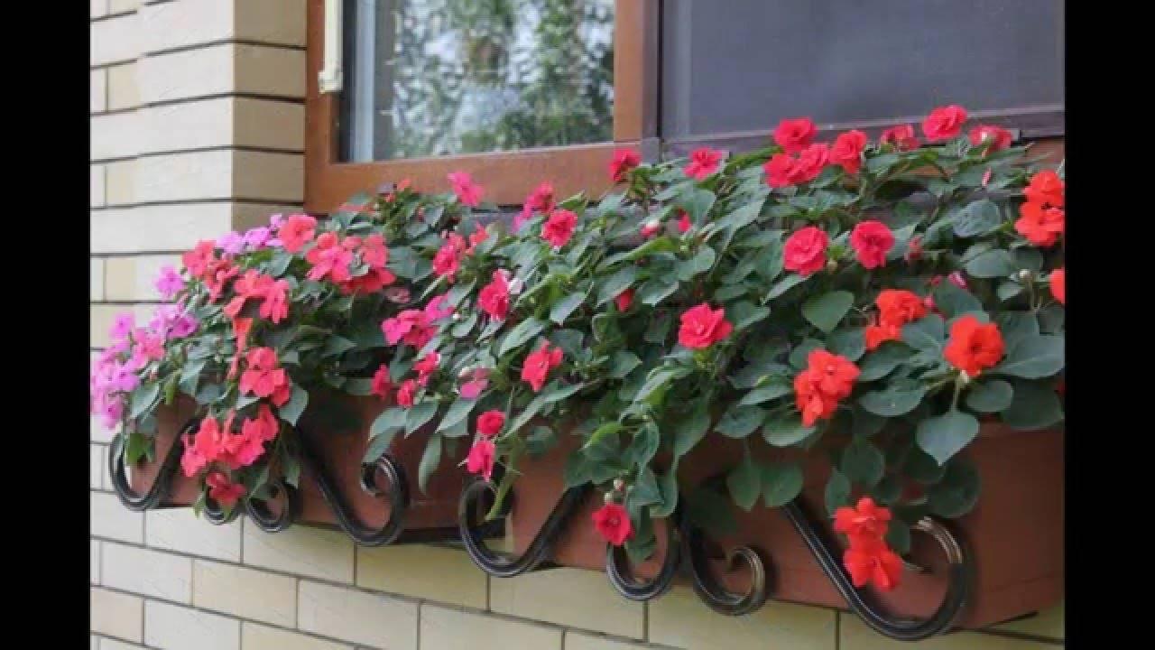 Бальзамин: выращивание из семян в домашних условиях - подробная инструкция!
