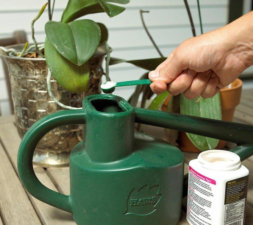 Цветение орхидеи: как начинает распускаться растение, уход за ним во время раскрытия в домашних условиях, фото красавицы