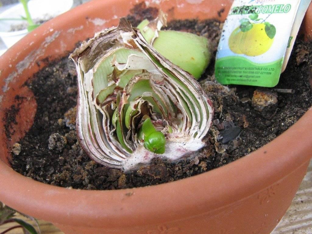 Размножение традесканции: как размножить ее семенами, делением и черенками в воде? уход после черенкования