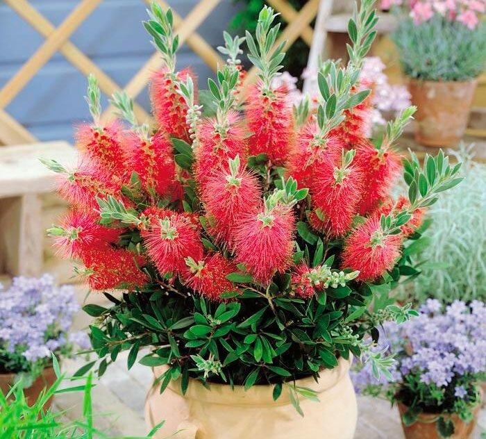 Виды комнатного и садового бонсай - на фото: цветы и растения, деревья