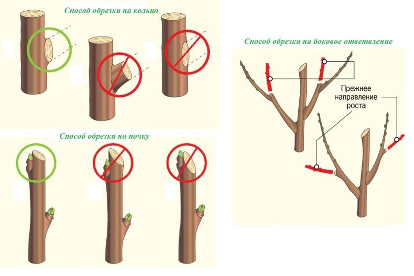 Чем замазывать дерево после обрезки