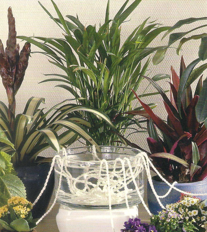 Как и когда пересаживать комнатные цветы правильно, пересадка домашних цветов