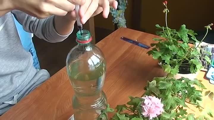 Подкормка герани (пеларгонии) йодом: как поливать герань йодом и перекисью водорода для обильного цветения?