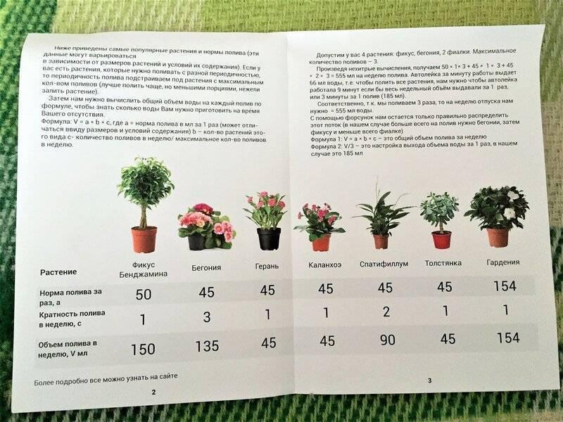 Как нужно поливать комнатные цветы? 26 фото как часто делать полив растений в горшках водой? все о системах автоматического полива в отсутствии хозяев