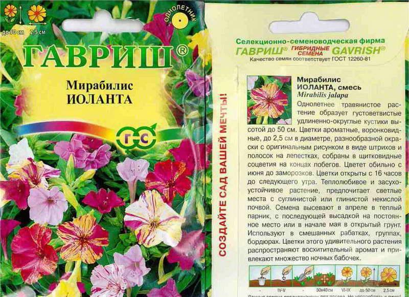 Цветок ночная красавица – особенности ухода