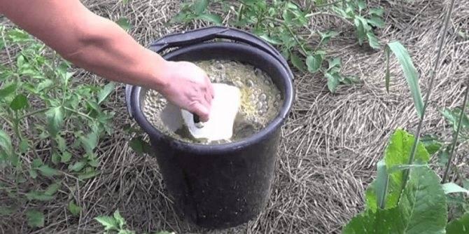 Чем подкормить гортензию весной для пышного цветения в саду - pocvetam.ru