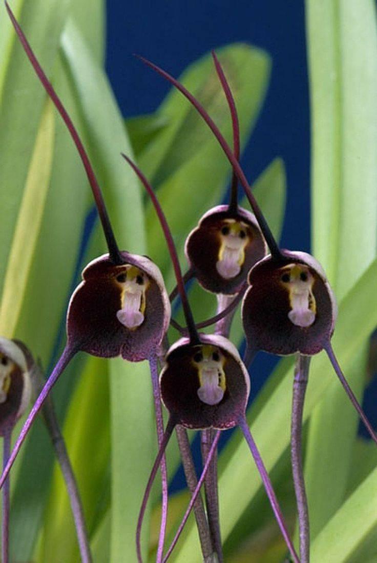 Орхидея блетилла: выращивание, посадка и уход, размножение (фото) - читайте на орхис