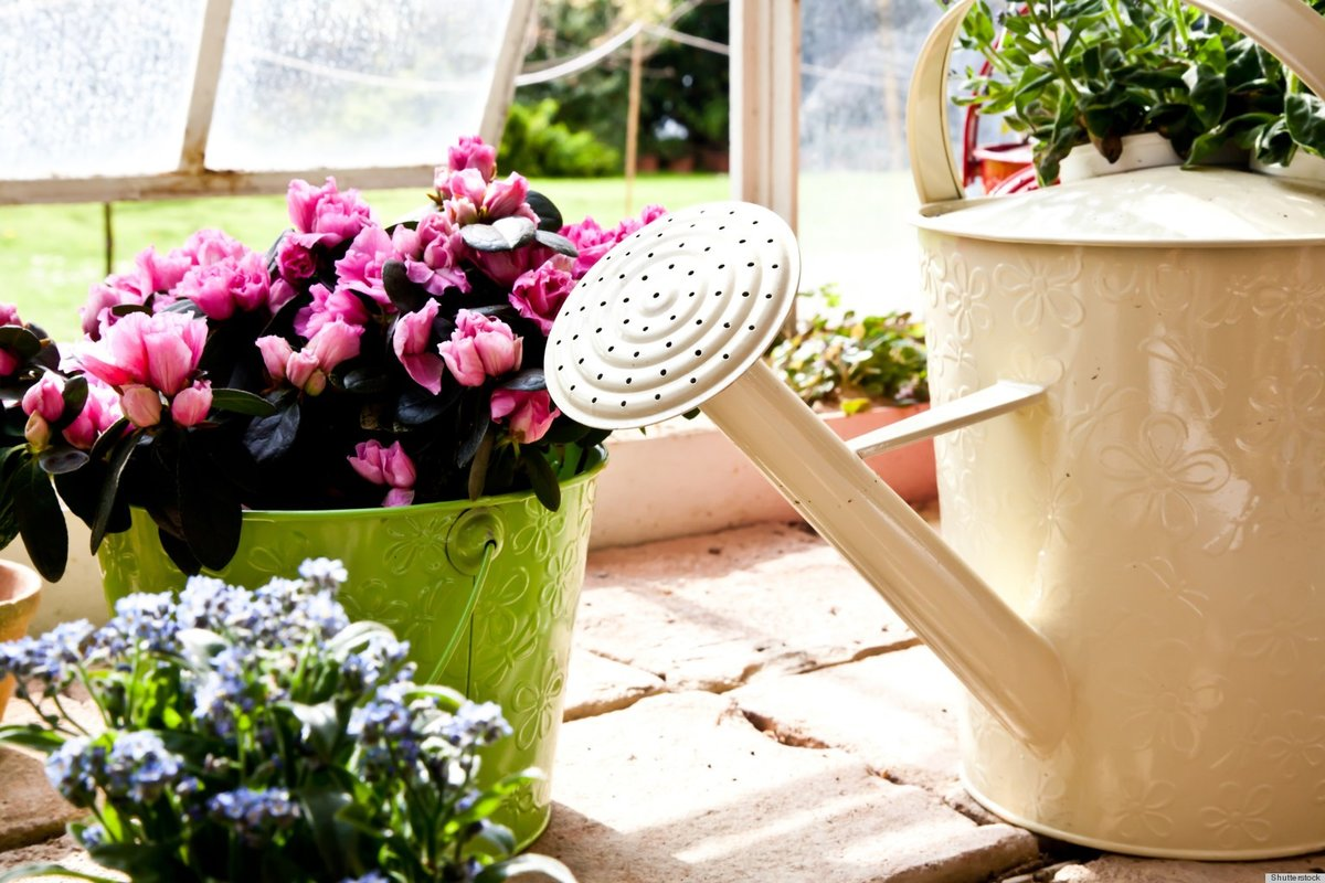Чем подкормить герань для цветения обильного и пышного: как удобрять, чтобы комнатное растение хорошо распускалось, чем ее лучше полить из народных средств на улице?