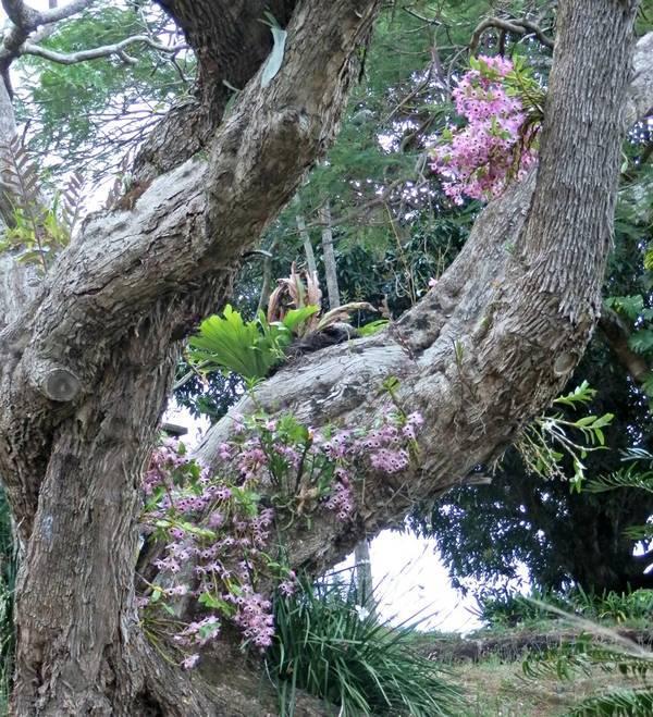 Орхидея в природе — одно из прекрасных ее чудес
