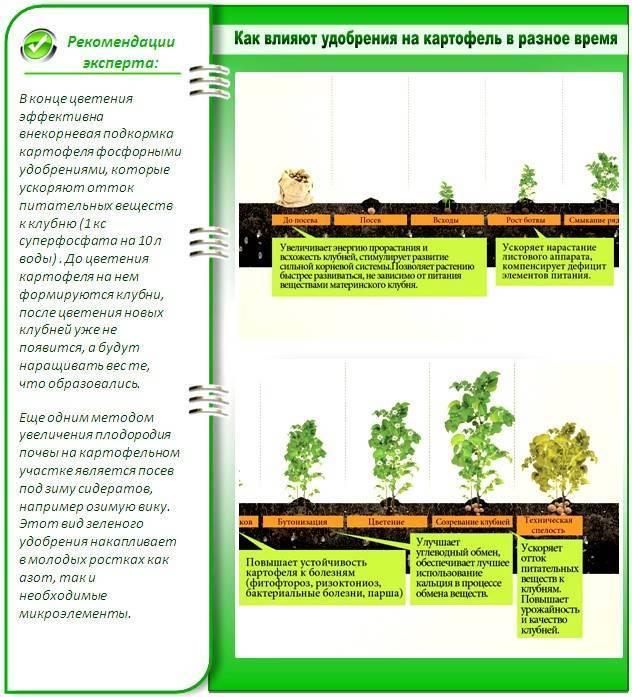 Отращивание (наращивание) корней у орхидеи фаленопсис в: воде, мхе, субстрате и на коре - читайте на орхис