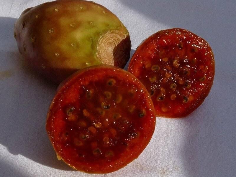 Кактусы со съедобными плодами: виды, названия и их вкусовые качества