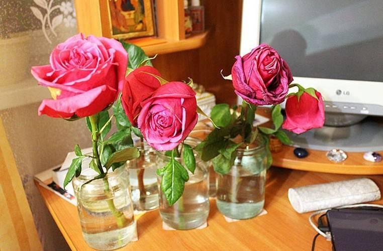 Как сохранить розы в вазе: что добавить в воду, чтобы цветы простояли дольше