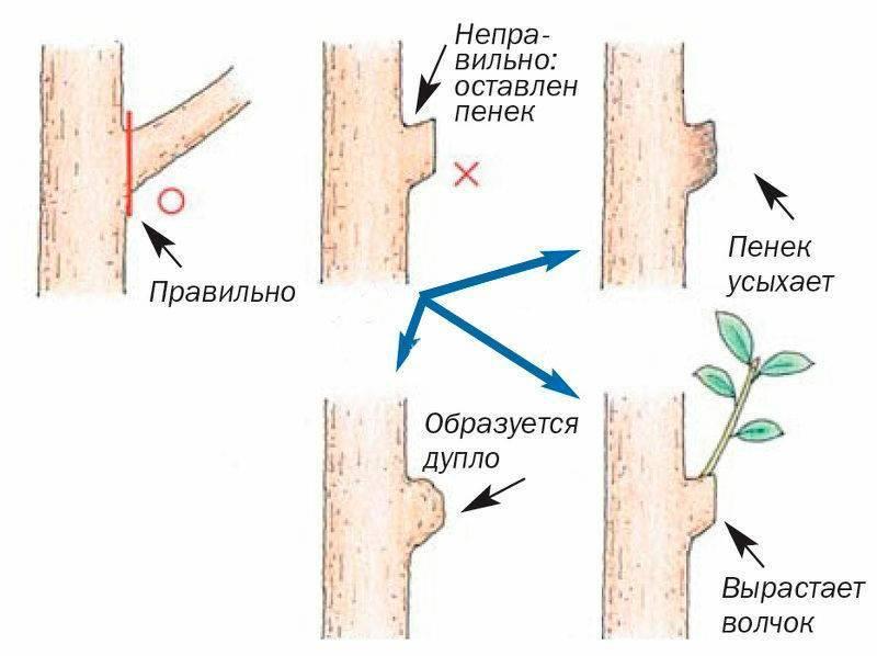Чем замазывать срезы плодовых деревьев. замазка ран