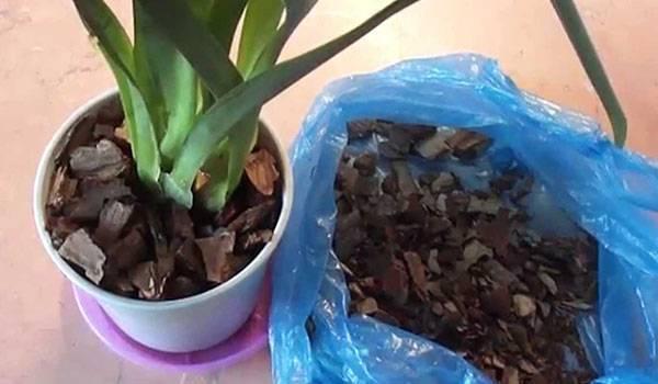 Орхидея мильтония: варианты пересадки и ухода за цветком в домашних условиях