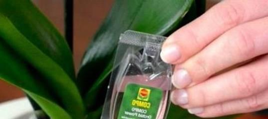 Удобрения для цветения орхидей в домашних условиях и на улице: чем подкормить и поливать, чтобы она всегда давала деток?