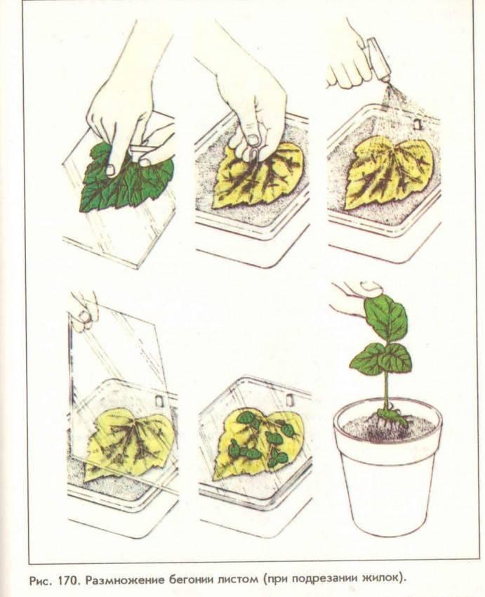 Как ухаживать за кактусом в горшке в домашних условиях. уход за домашним кактусом: полив, посадка, размножение — инструкция