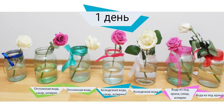 Как сохранить розы в вазе дольше правильно