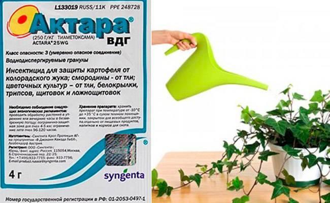 Актара для комнатных растений: инструкция по применению