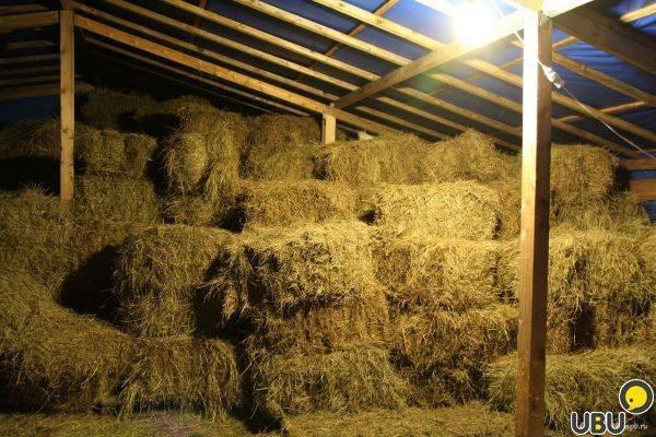 Люпин как сидерат: как посеять, влияние люпинов на почву, уход